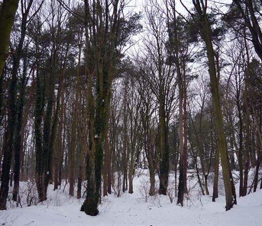 Coundon Woods