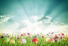 Easter activities eggs sunshine