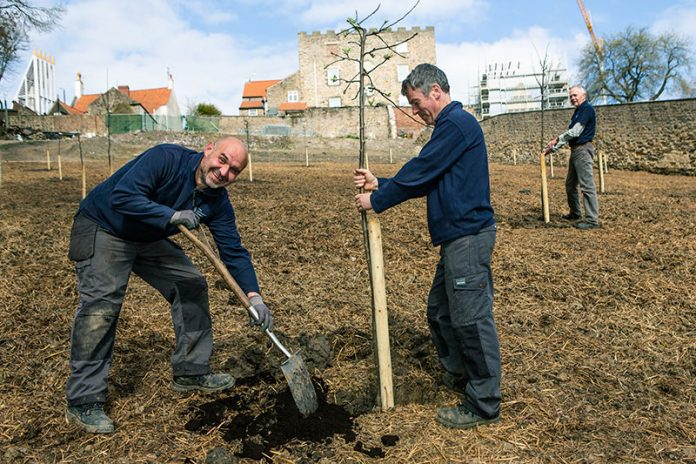 Members of The Auckland Project's Parks & Gardens Team planting the orchard at the Walled Garden. Photo: Jamie Sproates, courtesy of The Auckland Project