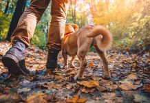 walking outdoors muddy boots-dog