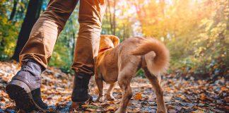 walking outdoors muddy boots-dog