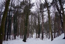 Coundon Woods