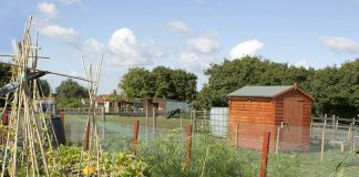 Chilton Town Council cancels allotments rents for 2020-21