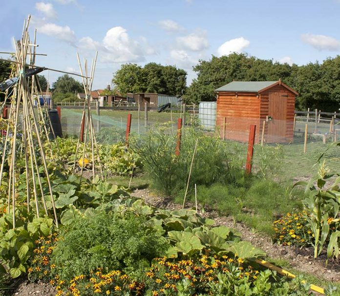 Chilton Town Council cancels allotments rents for 2020-21