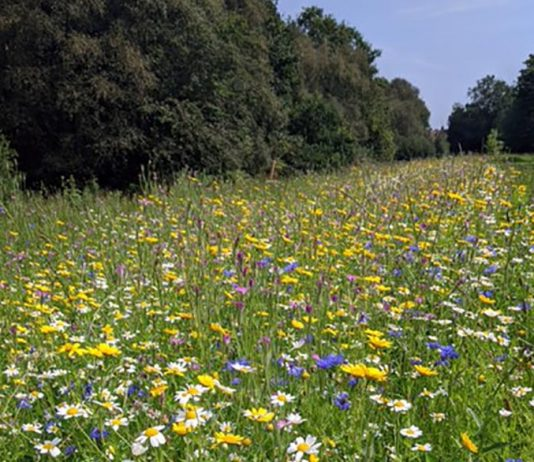 Cow Plantation Nature Reserve wild flowers